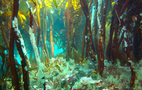 Tareskoger danner livsgrunnlag for et mylder av annet marint liv.